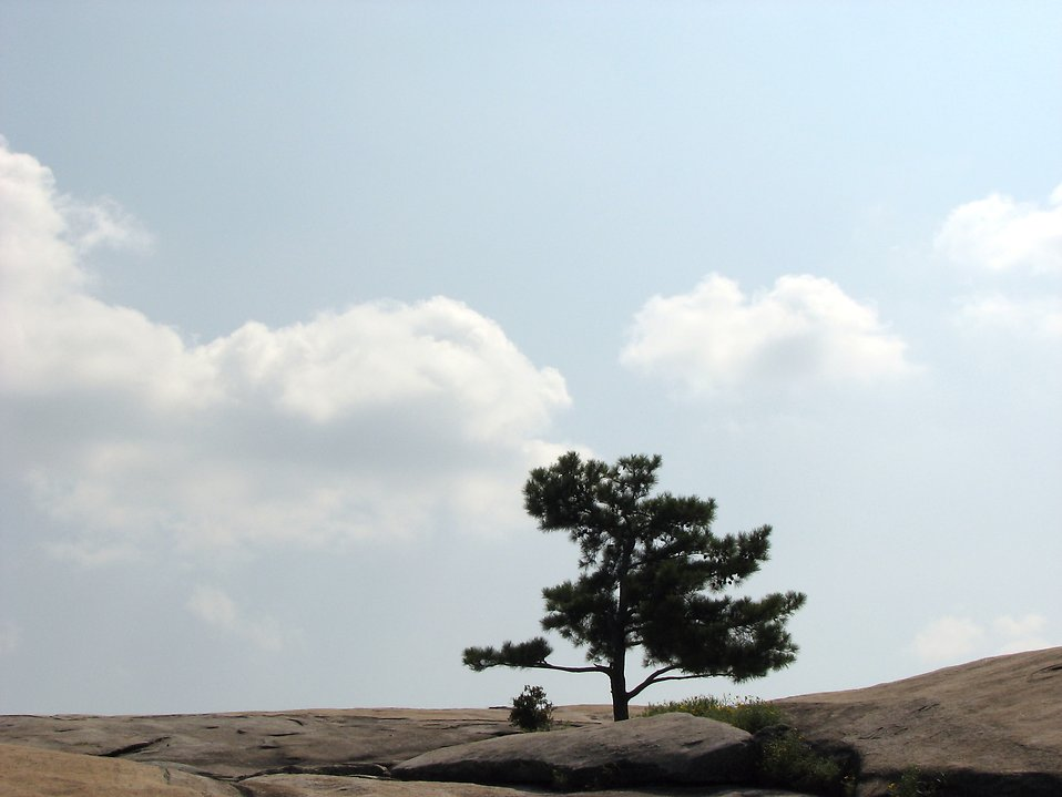 Single tree on top of Stone Mountain : Free Stock Photo