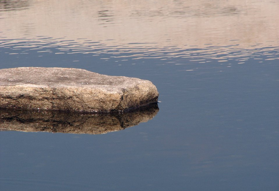 Flat rock in a small pond : Free Stock Photo