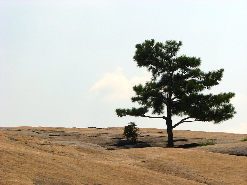 Single tree at the top of Stone Mountain : Free Stock Photo