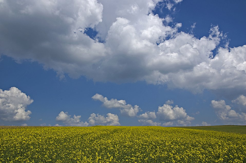 A field and cloudy blue sky landscape : Free Stock Photo