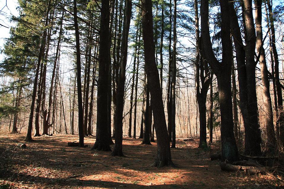 Forest Glen : Free Stock Photo