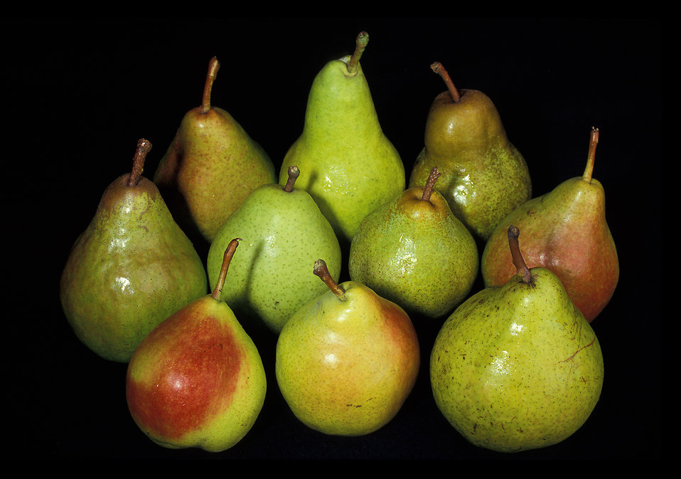 A group of pears isolated on a black background : Free Stock Photo
