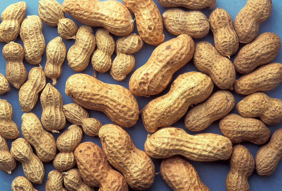 A group of peanuts on a blue background : Free Stock Photo