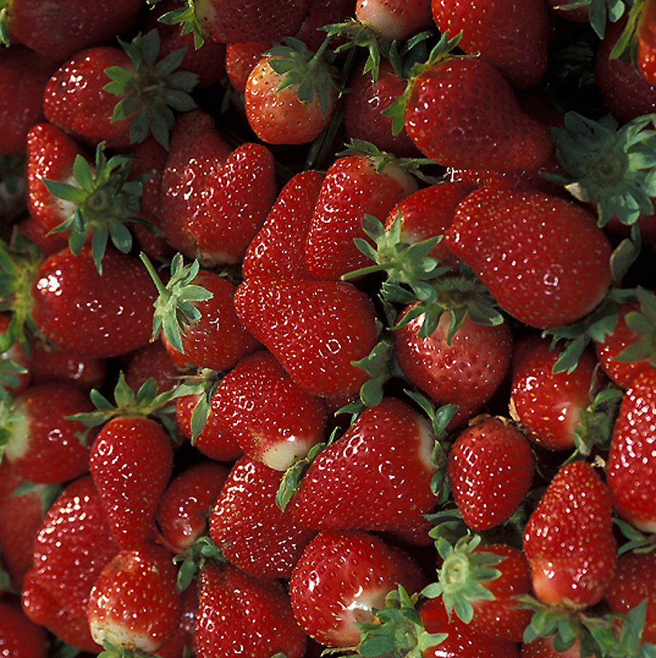 A bunch of red Chandler strawberries : Free Stock Photo