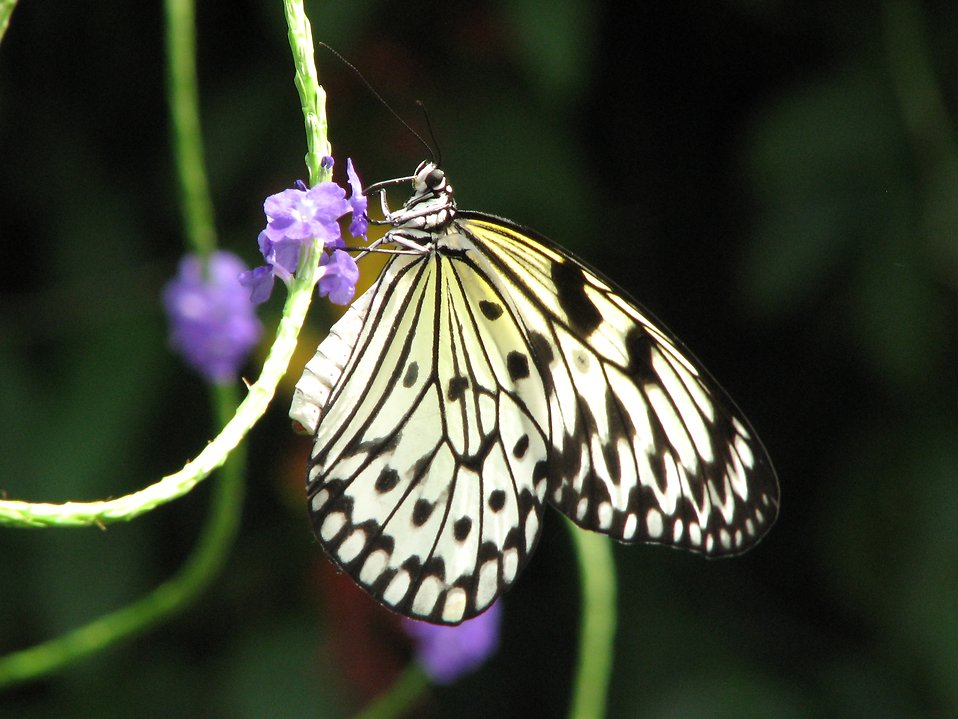 Close-up of a yellow butterfly : Free Stock Photo