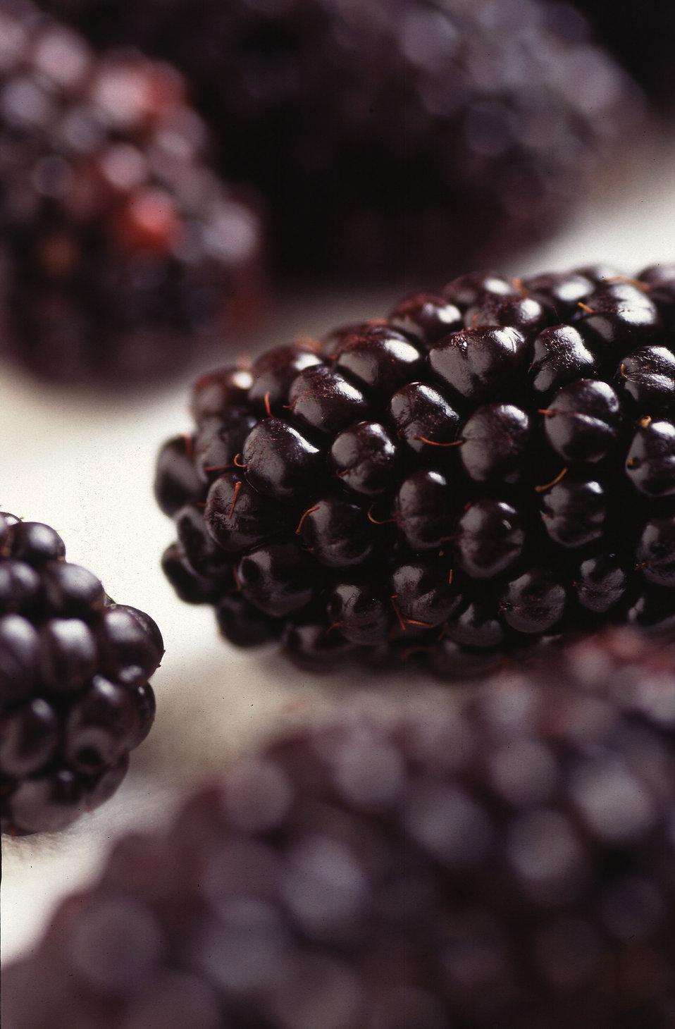 Closeup of blackberries : Free Stock Photo