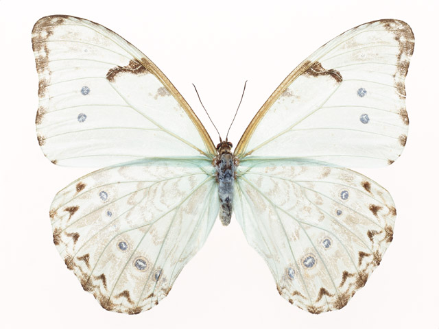 A white butterfly isolated on a white background : Free Stock Photo
