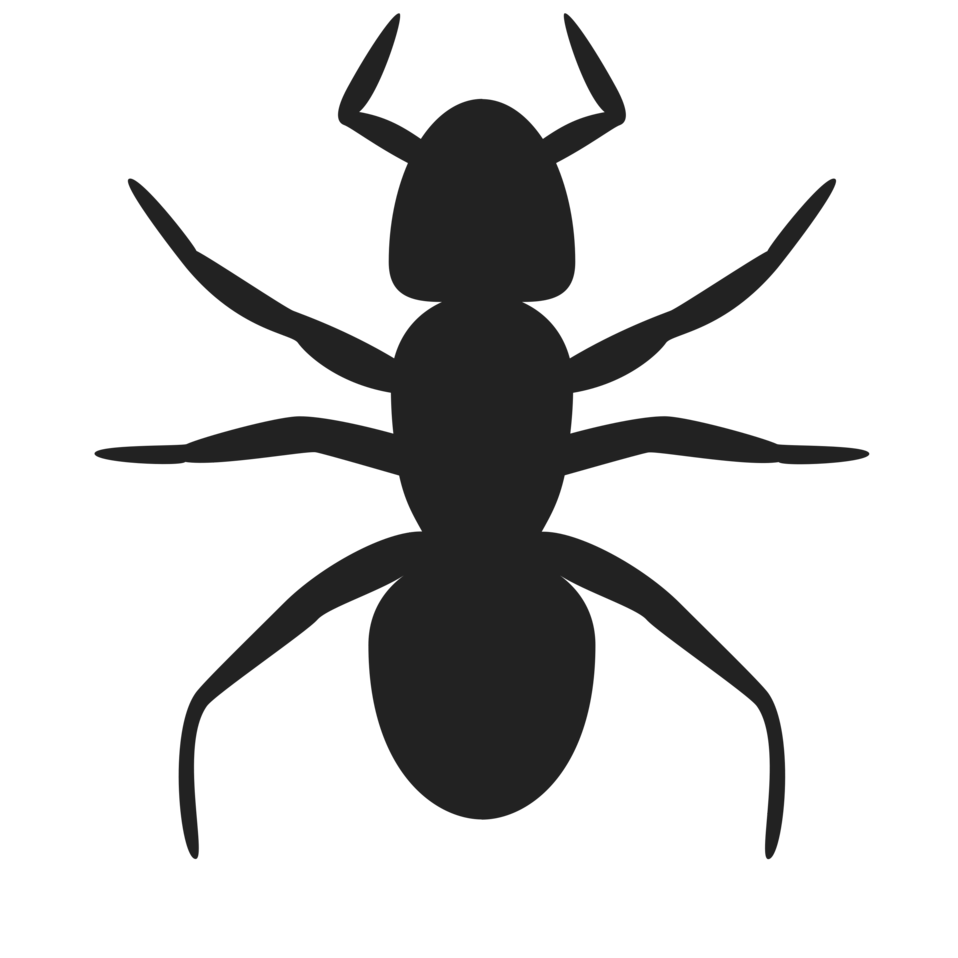 Illustration of an ant silhouette : Free Stock Photo