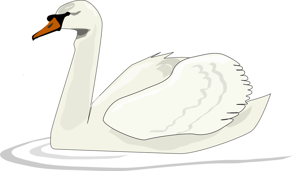 Illustration of a swan swimming : Free Stock Photo