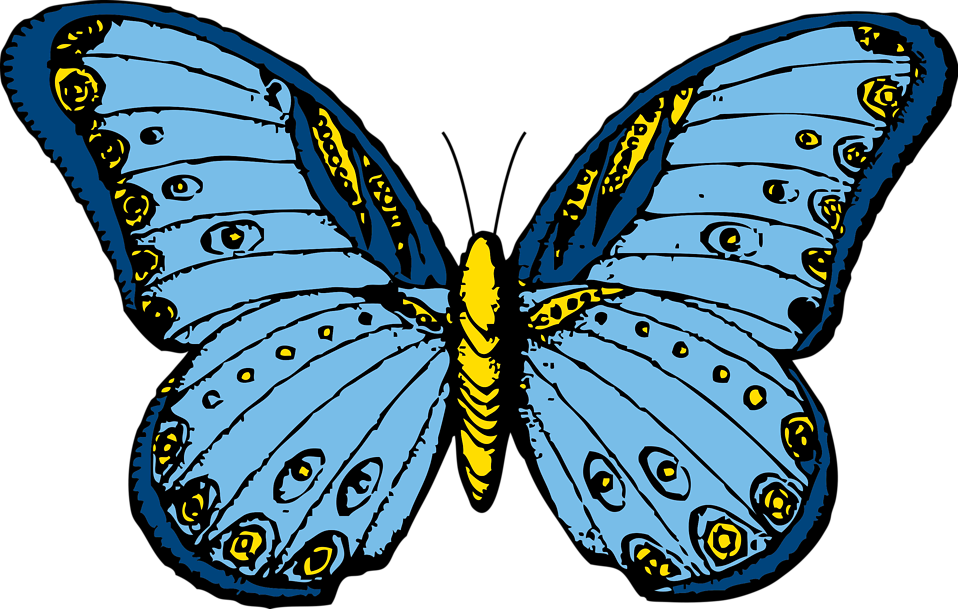 Illustration of a blue butterfly : Free Stock Photo