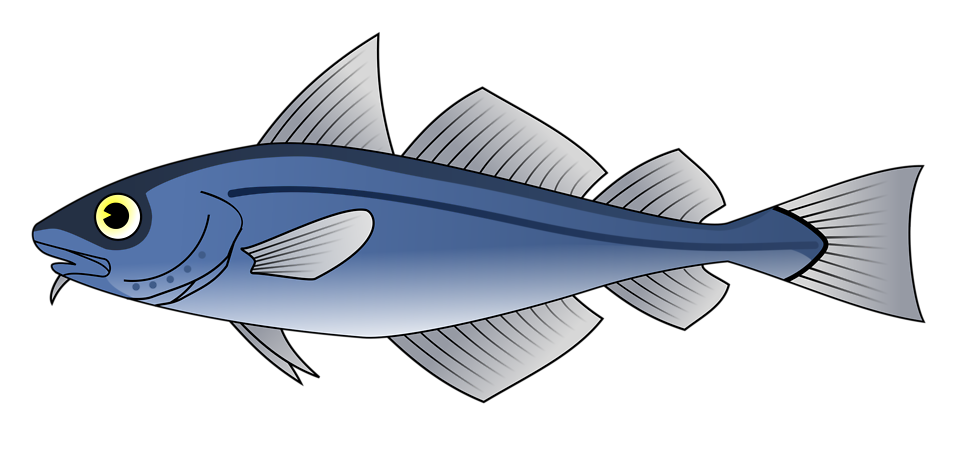 Illustration of a blue codfish : Free Stock Photo