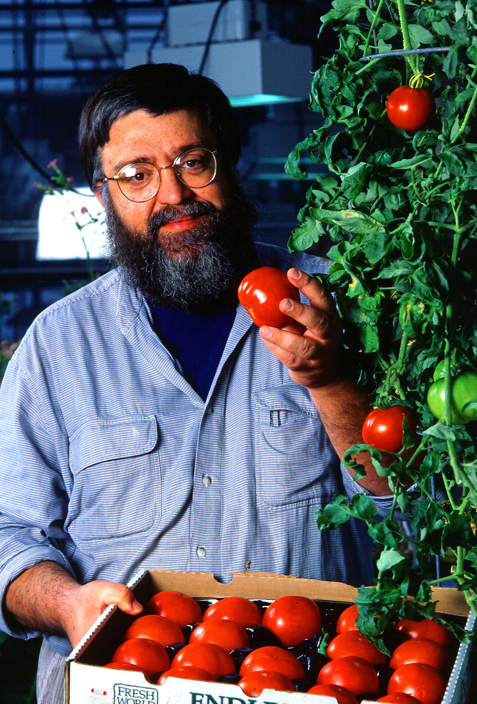 A researcher examining tomatoes : Free Stock Photo