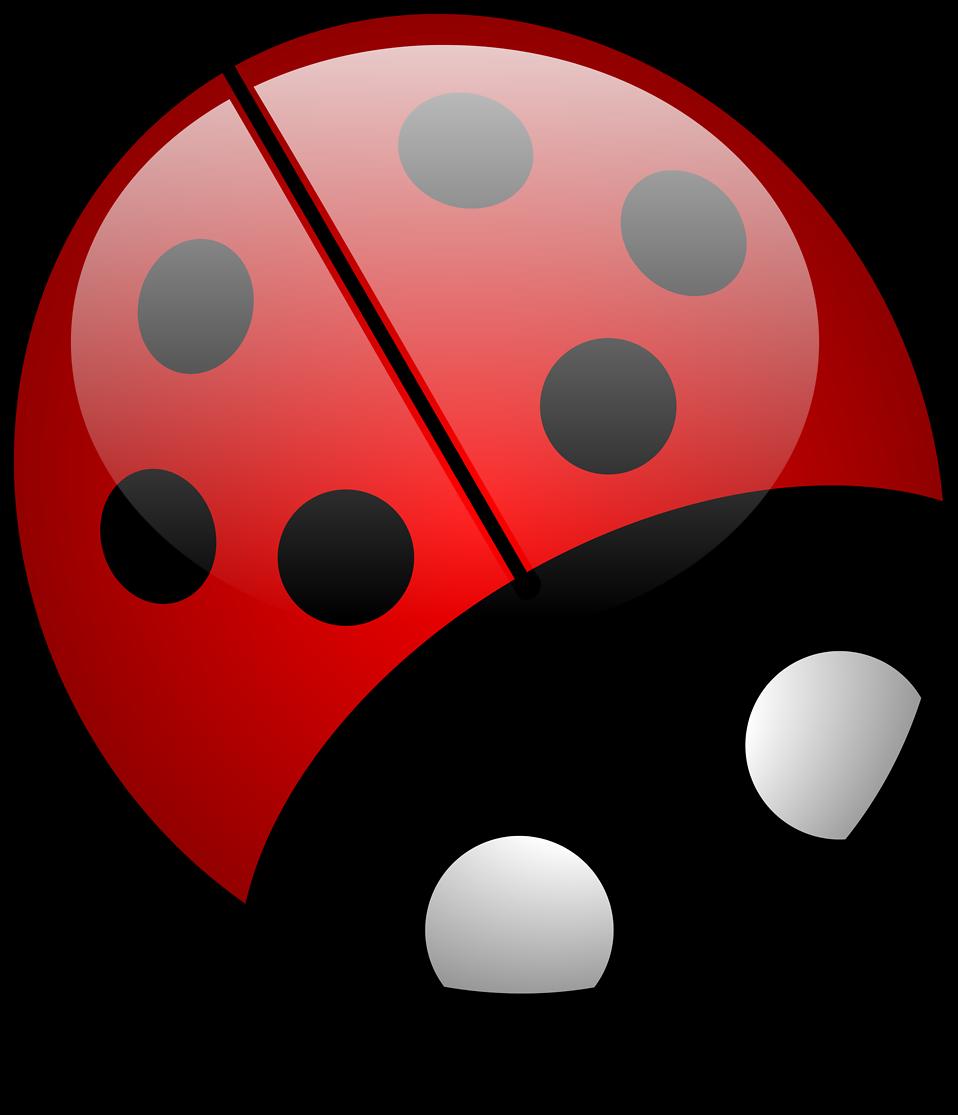 Illustration of a ladybug : Free Stock Photo