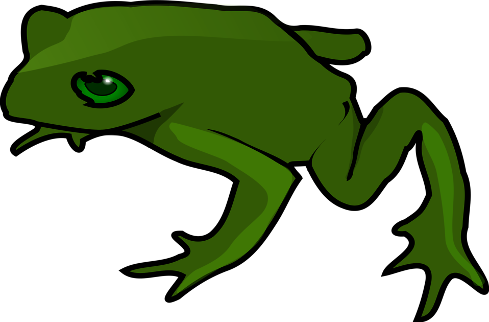 Illustration of a green frog : Free Stock Photo