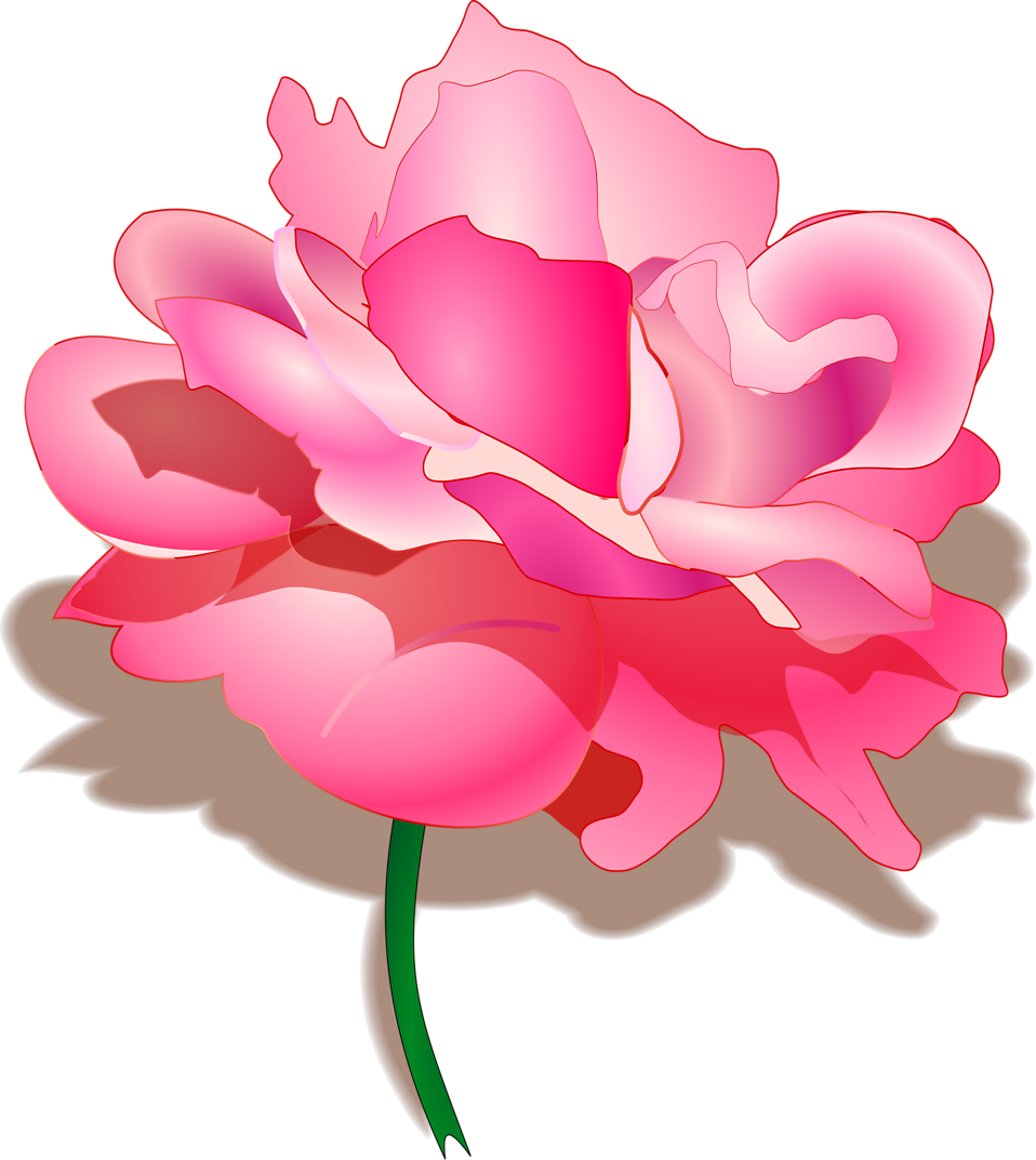 Illustration of a pink rose : Free Stock Photo