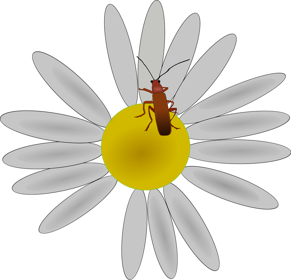Illustration of a bug on a flower : Free Stock Photo