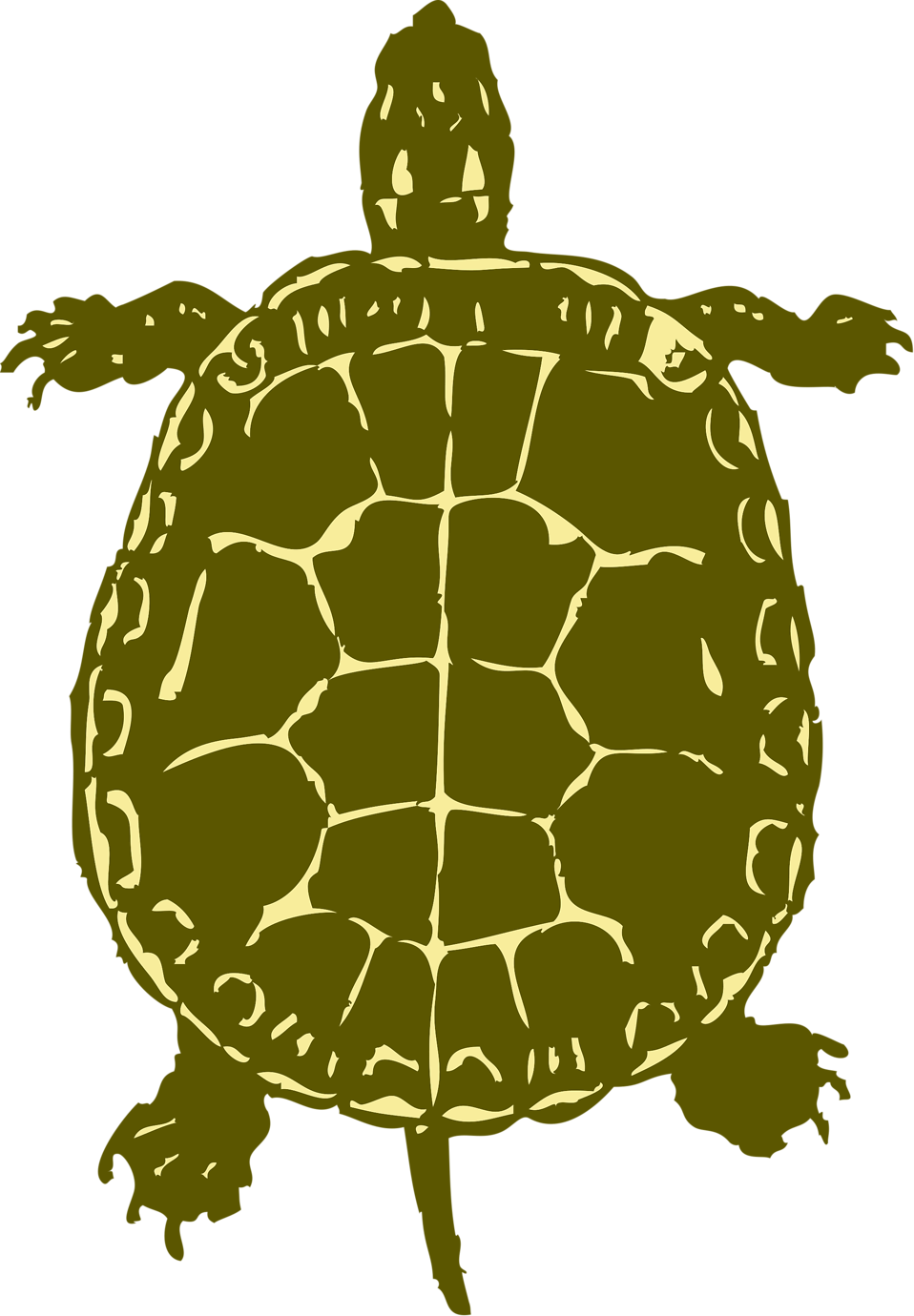 Illustration of a turtle : Free Stock Photo