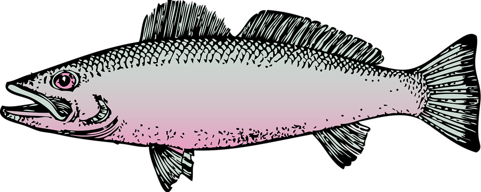 Illustration of a fish : Free Stock Photo