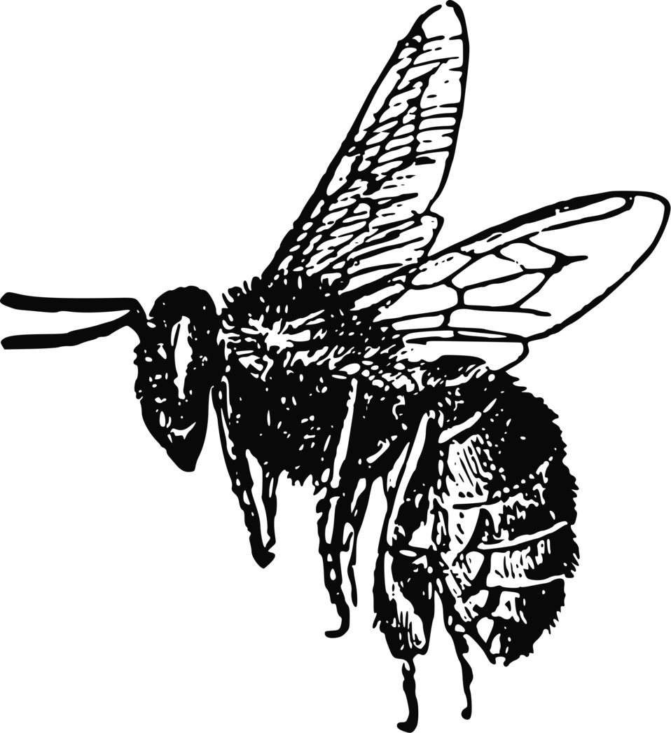 bee free stock photo illustration of a bee 10805