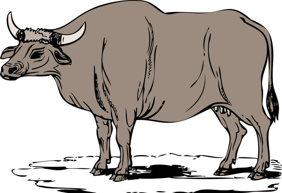 Illustration of a gaur : Free Stock Photo