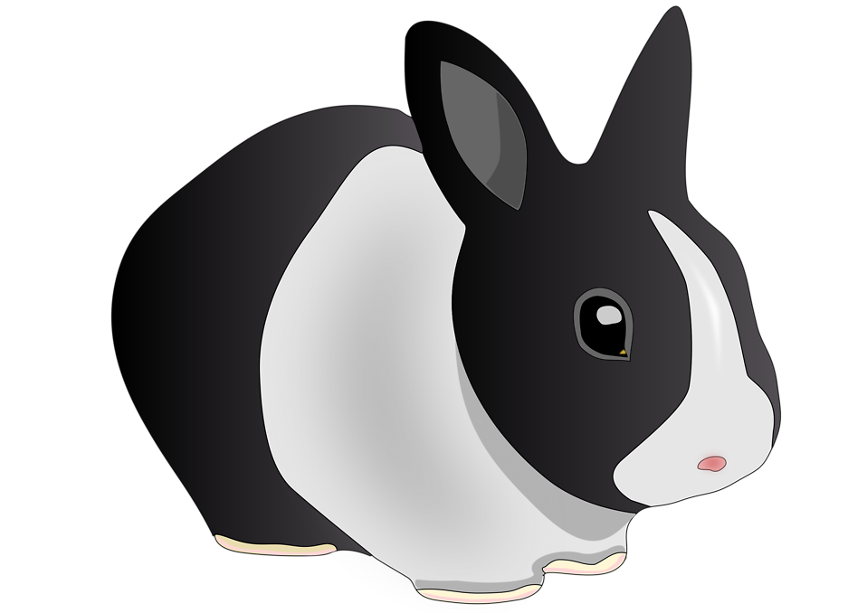 Illustration of a black and white rabbit : Free Stock Photo