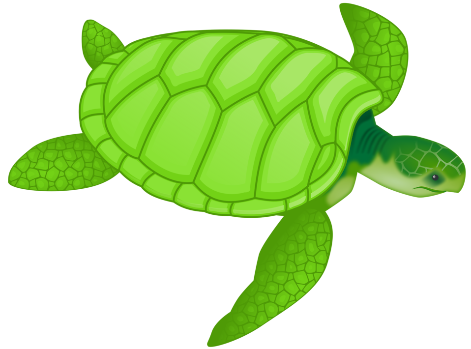 Illustration of a green sea turtle : Free Stock Photo