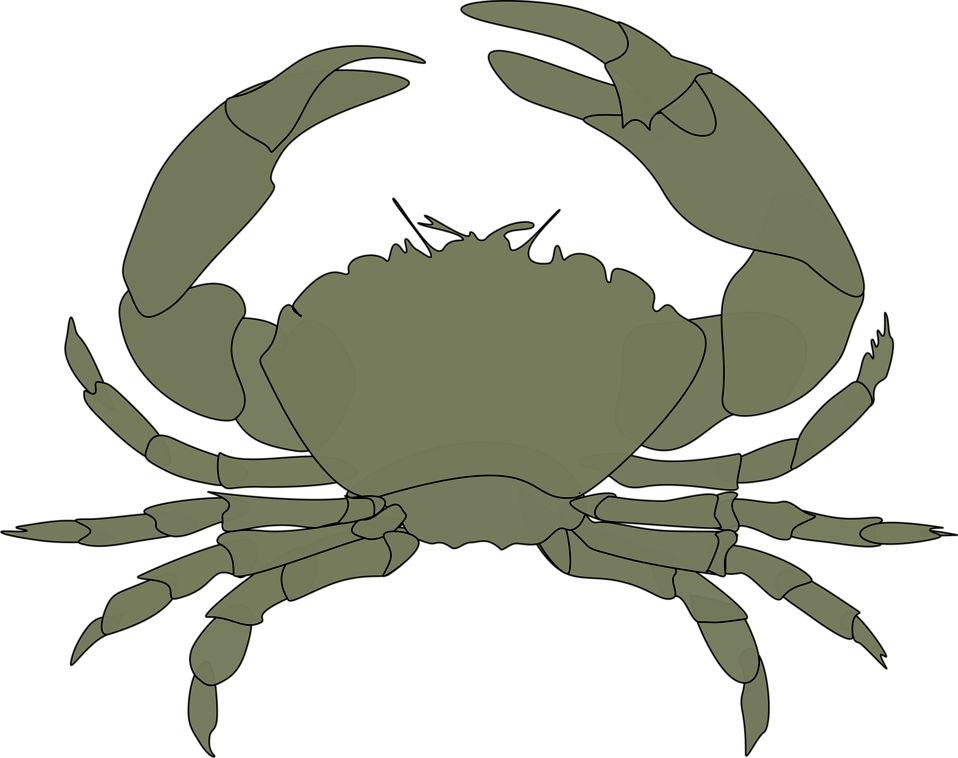Illustration of a crab : Free Stock Photo