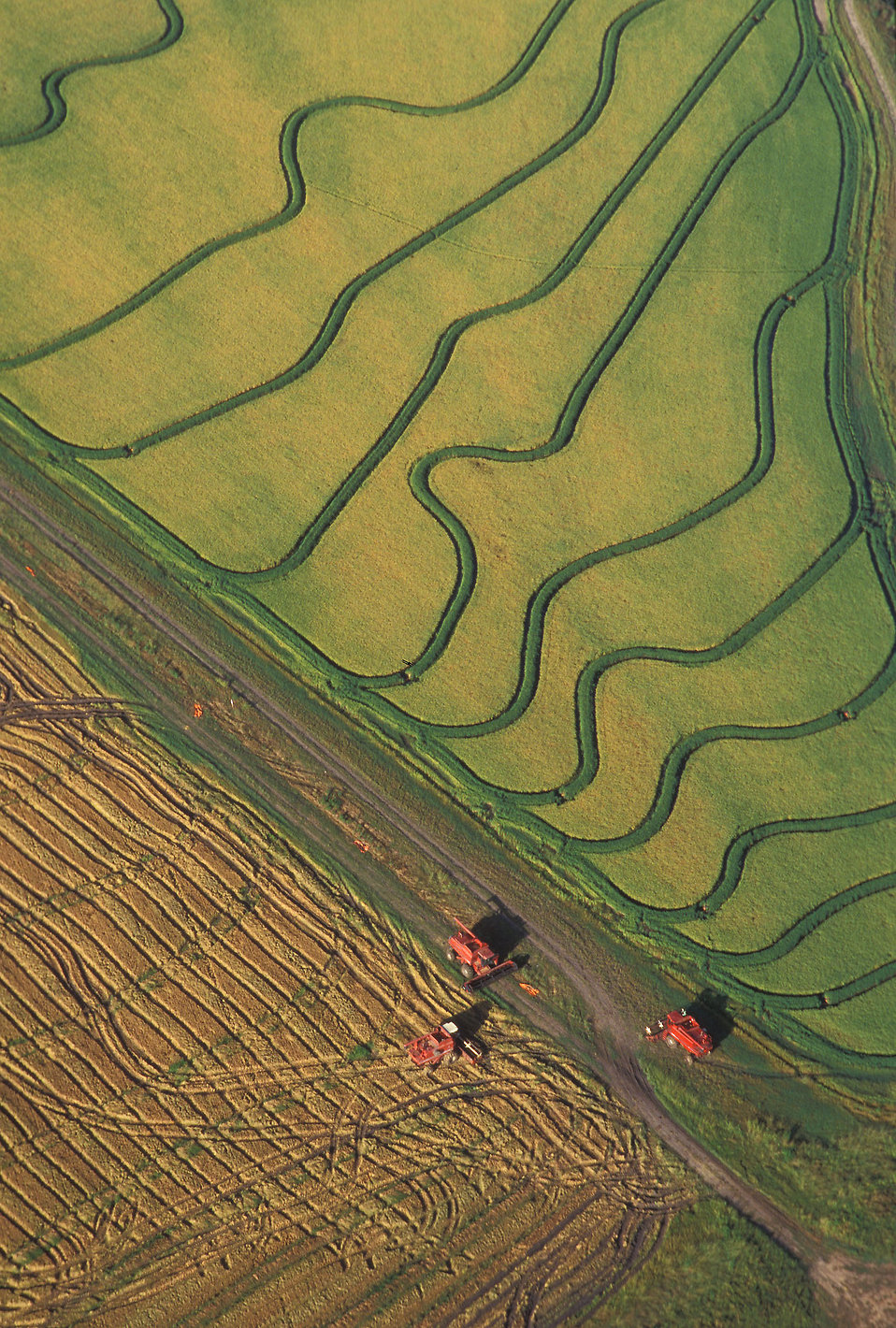 Aerial view of rice harvesting on a farm : Free Stock Photo