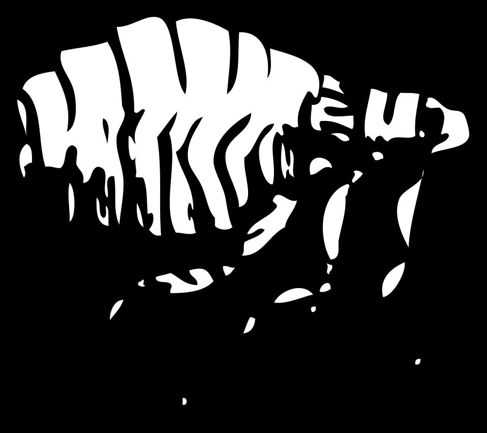Illustration of a flea : Free Stock Photo