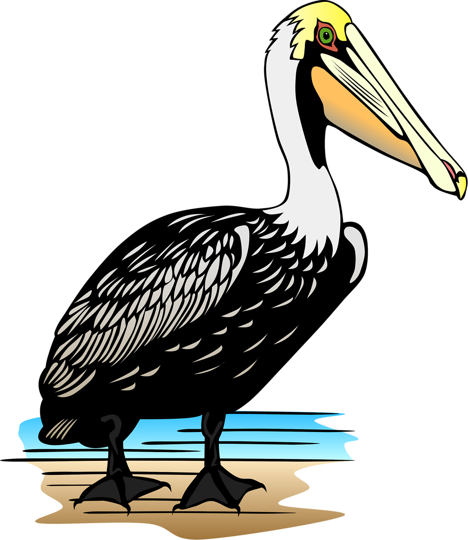 Illustration of a pelican : Free Stock Photo