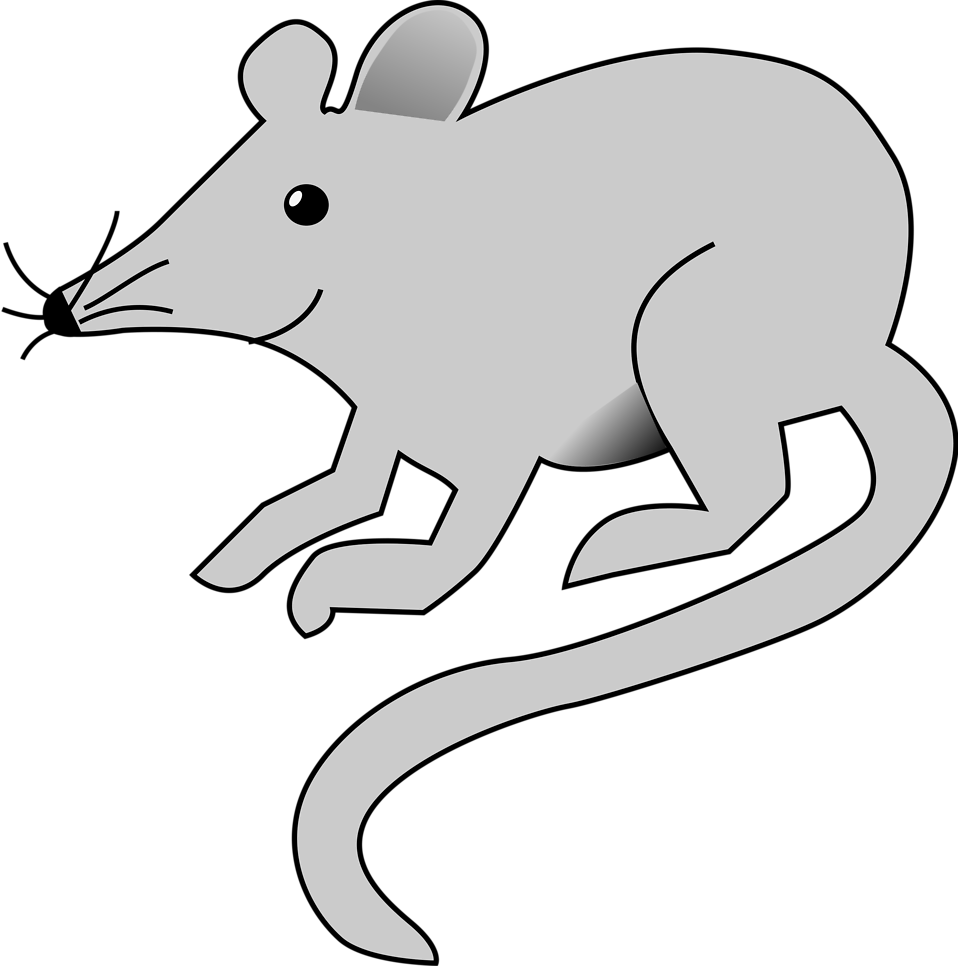 Illustration of a mouse : Free Stock Photo