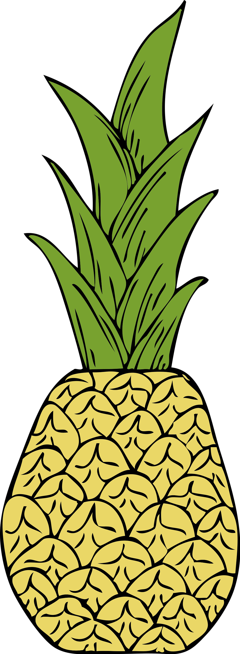 Illustration of a pineapple : Free Stock Photo