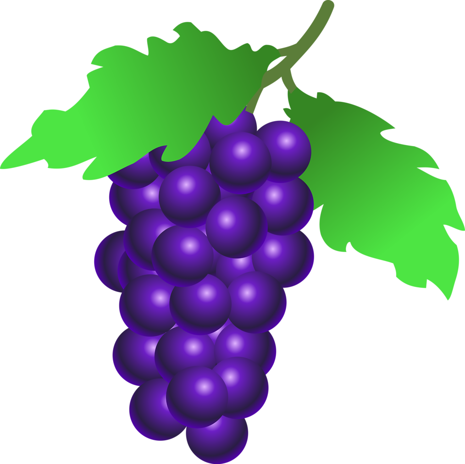 Illustration of a bunch of grapes : Free Stock Photo