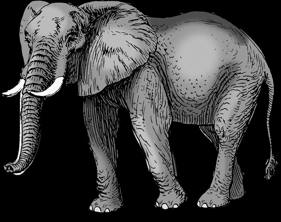 Elephant | Free Stock Photo | Illustration of an elephant ...