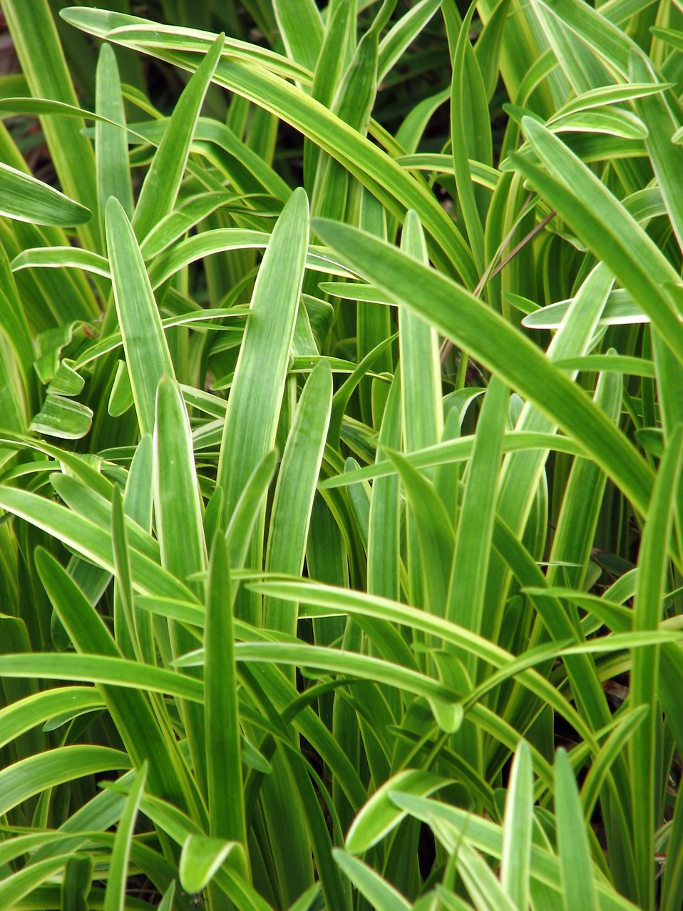 Close-up of tall green leaves : Free Stock Photo