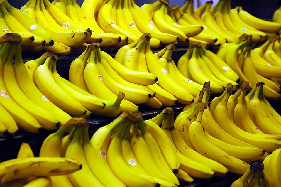 Bunches of yellow bananas : Free Stock Photo