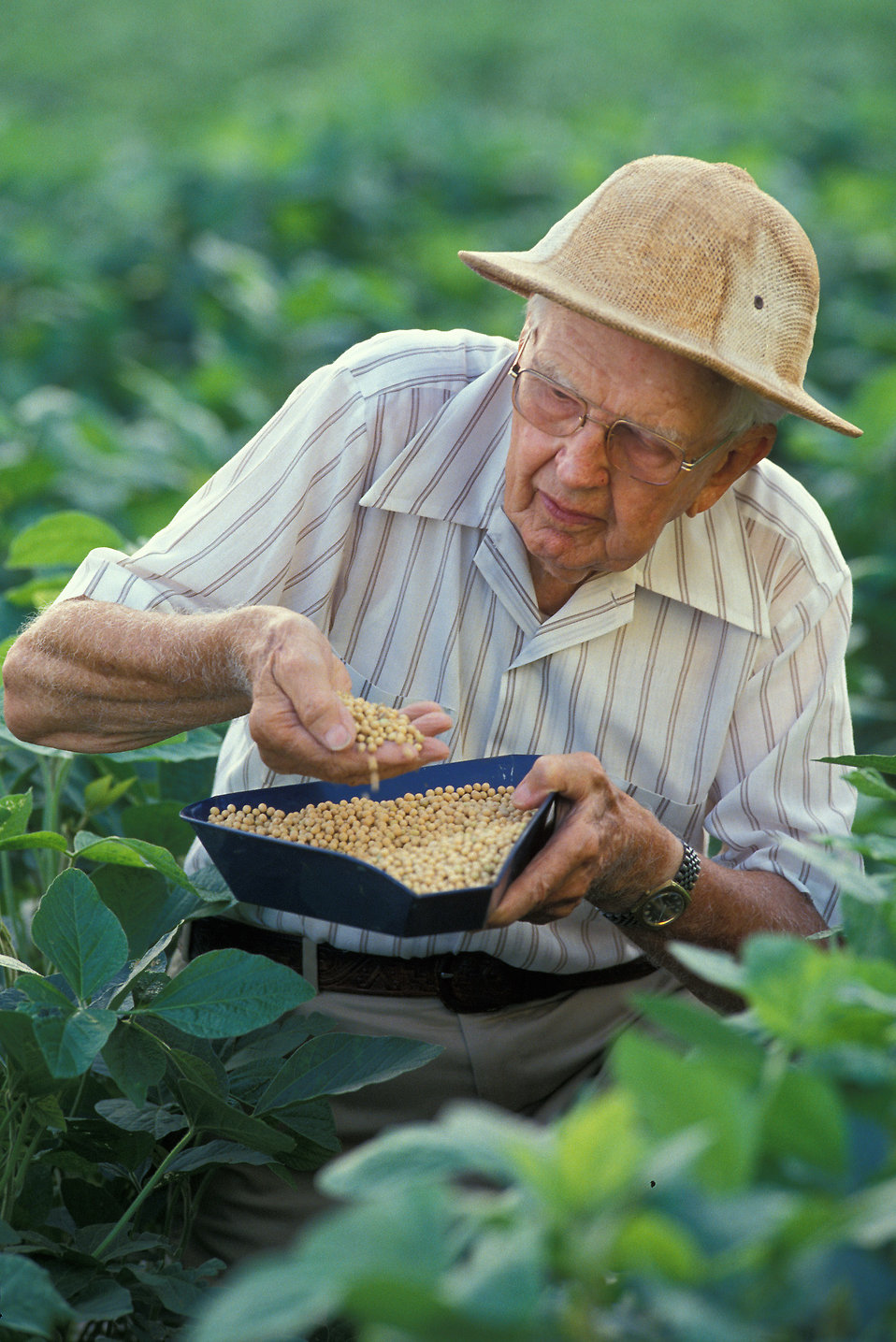 A researcher examining a soybean crop : Free Stock Photo