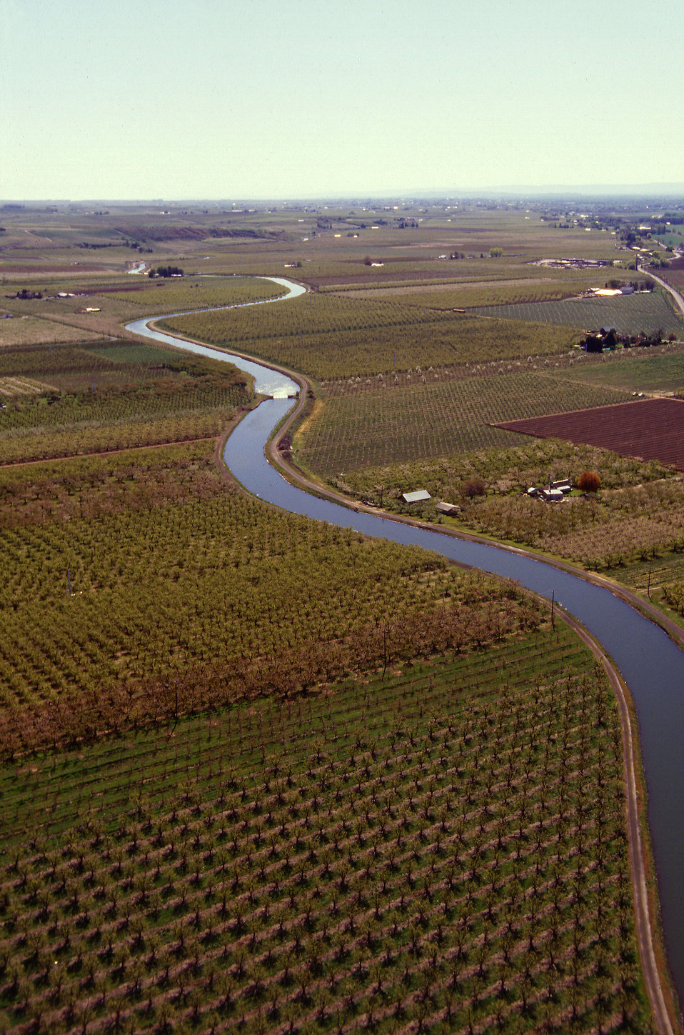 Aerial view of apple and pear orchards : Free Stock Photo