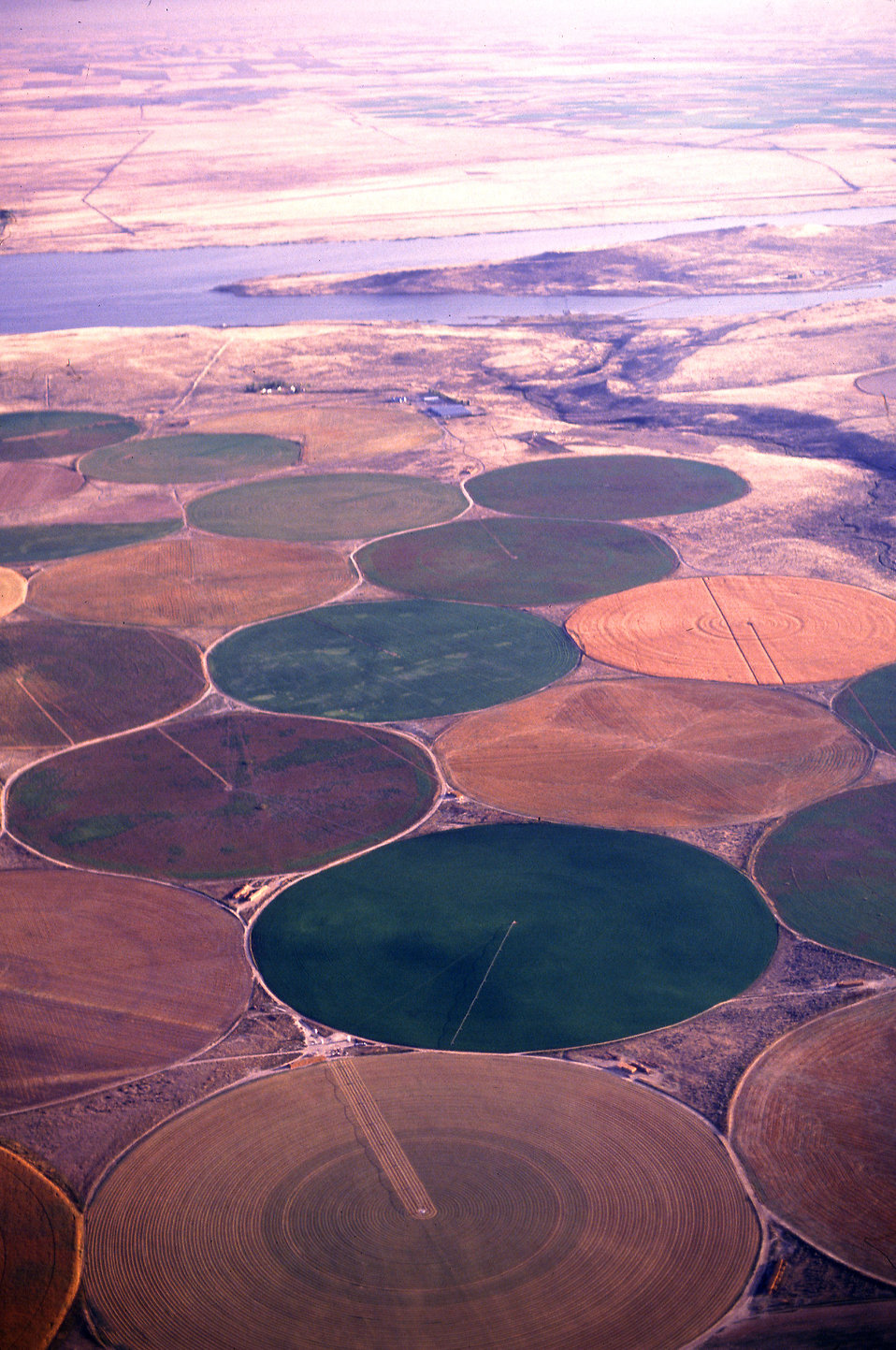 Aerial view of circular crop fields of wheat, alfalfa, potatoes and melons : Free Stock Photo