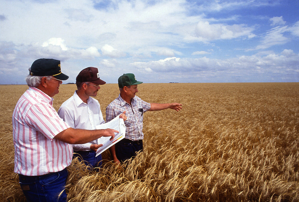 Researchers examing wheat in a field : Free Stock Photo