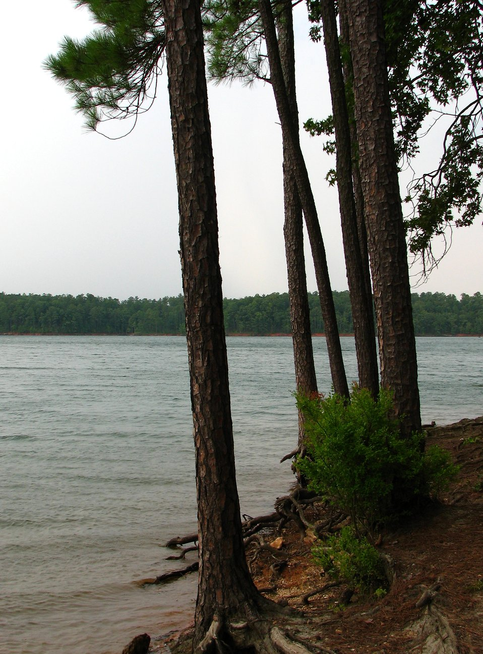 View of trees by a lake : Free Stock Photo
