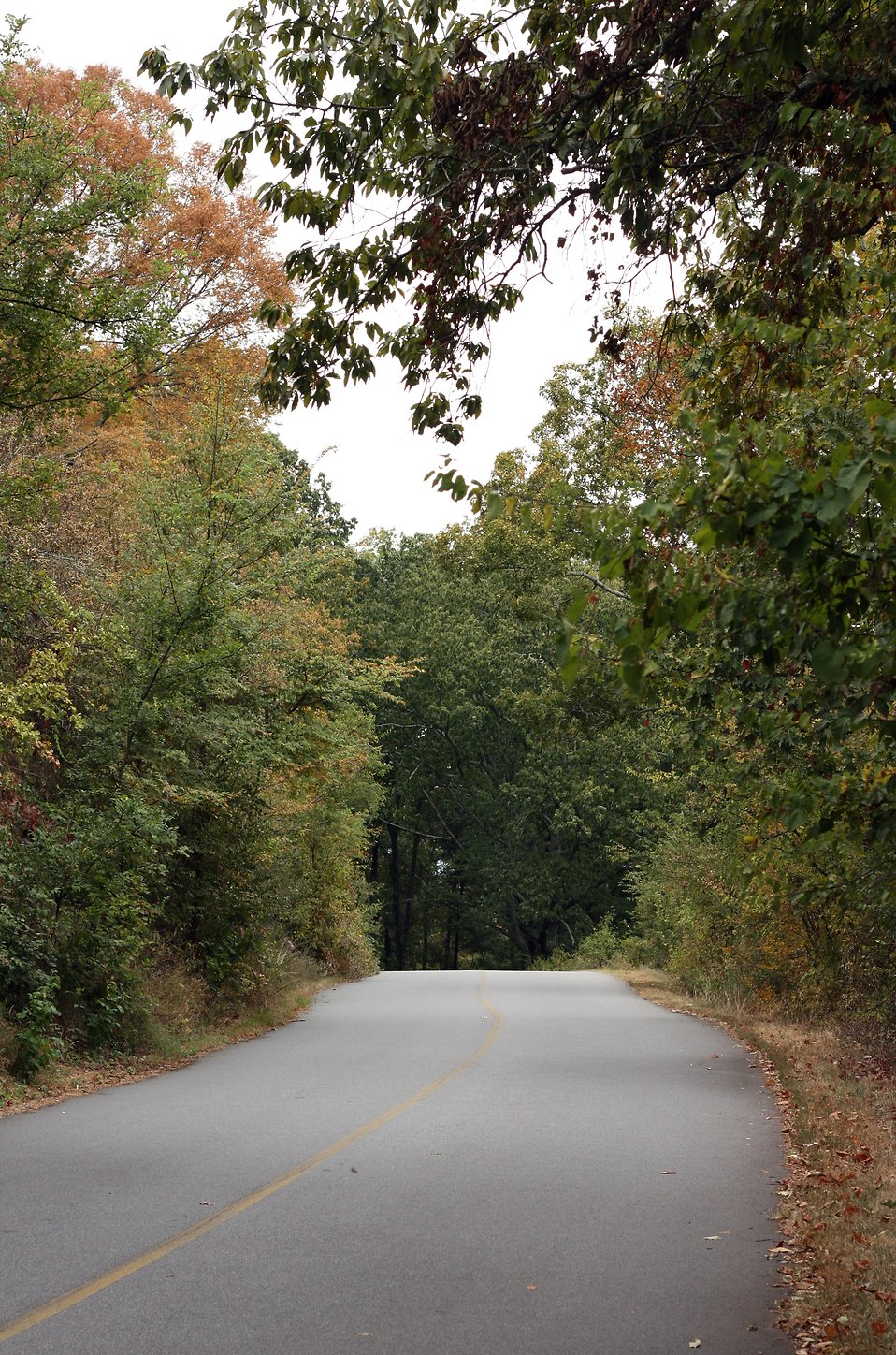 A winding road surrounded by trees in early Autumn : Free Stock Photo