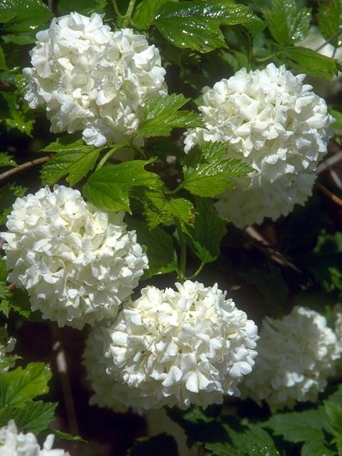 Close-up of white flowers : Free Stock Photo
