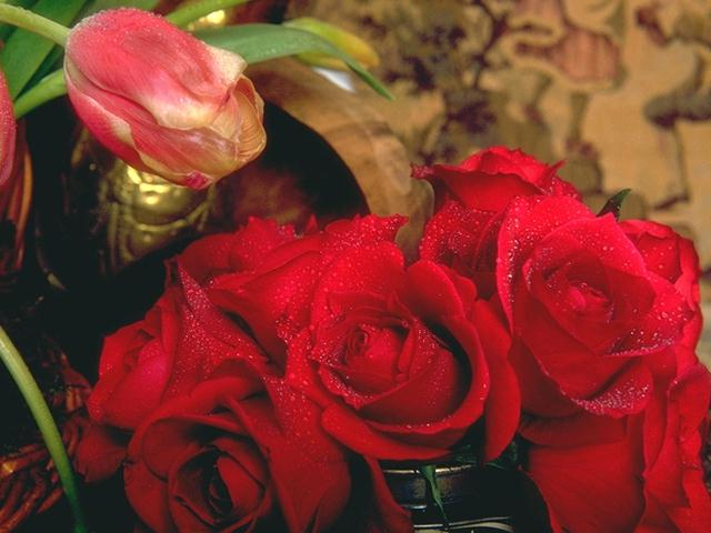 Close-up of red roses : Free Stock Photo