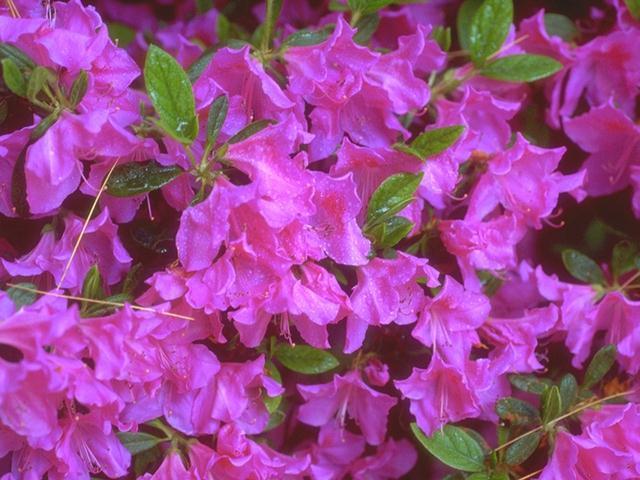 Close-up of purple flowers : Free Stock Photo
