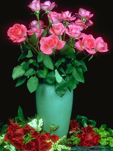A vase of pink roses surrounded by red roses : Free Stock Photo