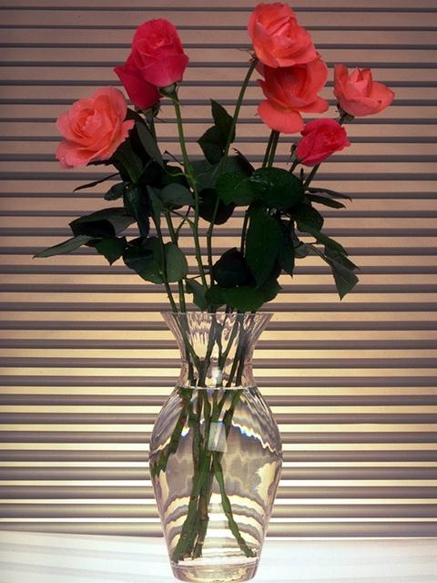 A glass vase with pink roses : Free Stock Photo