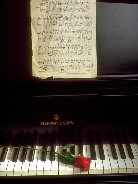 A single red rose lying on piano keys : Free Stock Photo