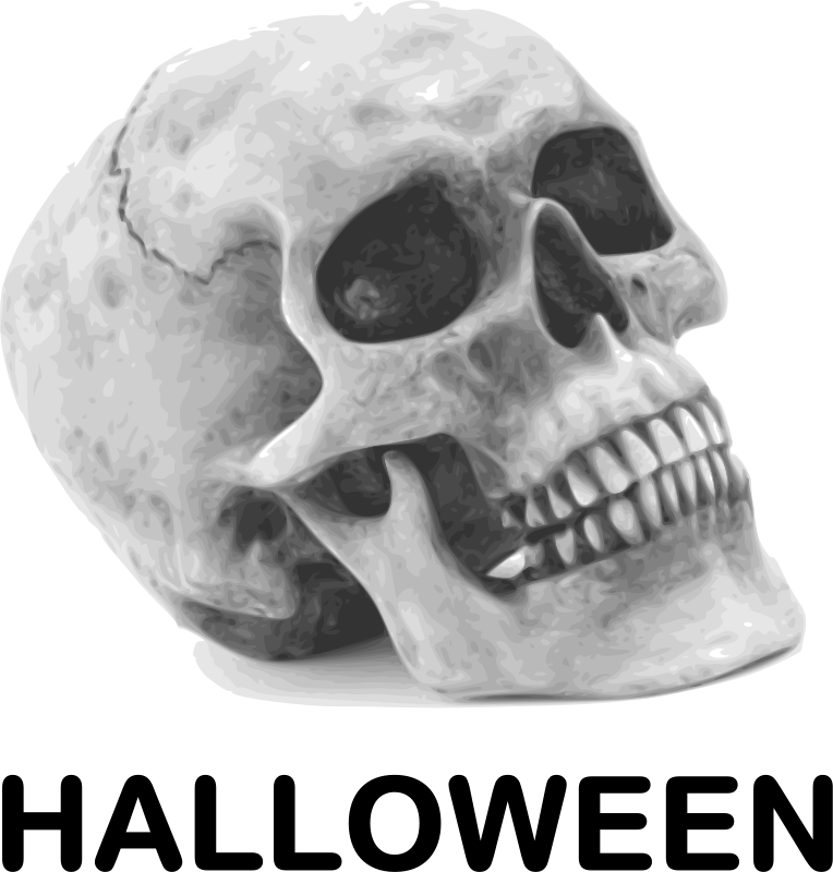 Illustration of a human skull : Free Stock Photo
