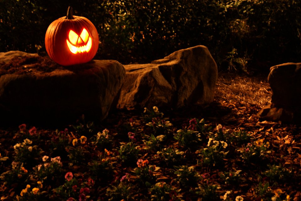 a halloween jack o lantern on a rock free stock photo